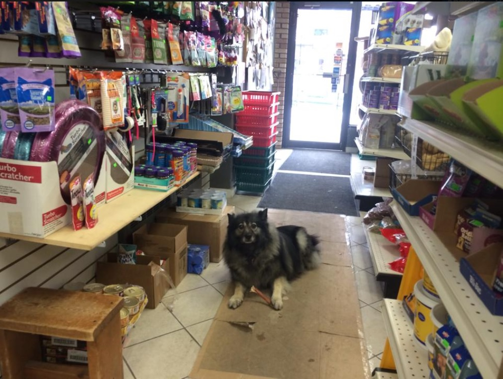 wagging tails (gallery pic 3 -dog in isle)jpg